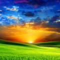 beautiful_sunrise_on_green_meadow